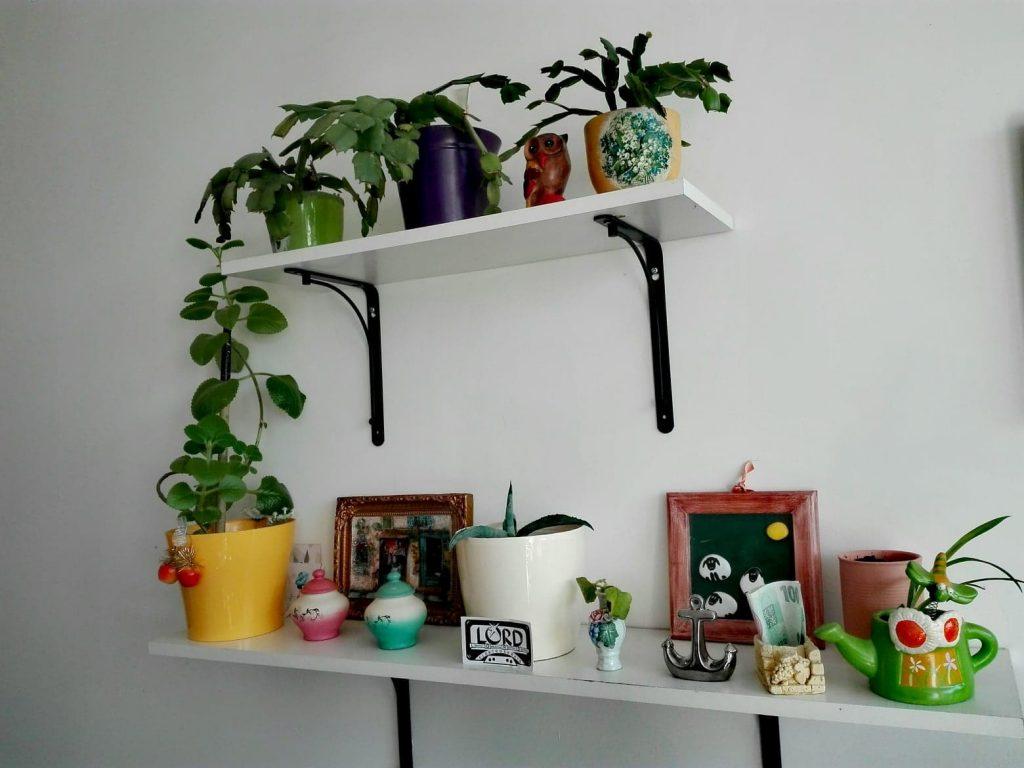 Izbové rastliny umiestnené na poličke na stene