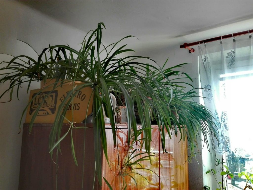 izbové rastliny a ich umiestnenie na skrini